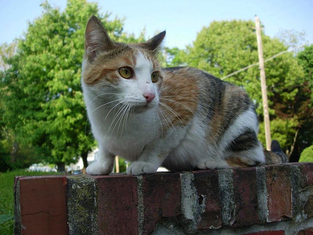 Spay Feral Cats Free San Antonio