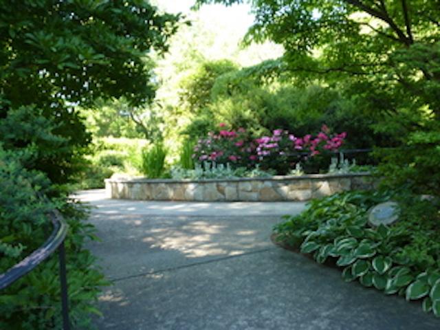 Nature Walk at Bailey Arboretum
