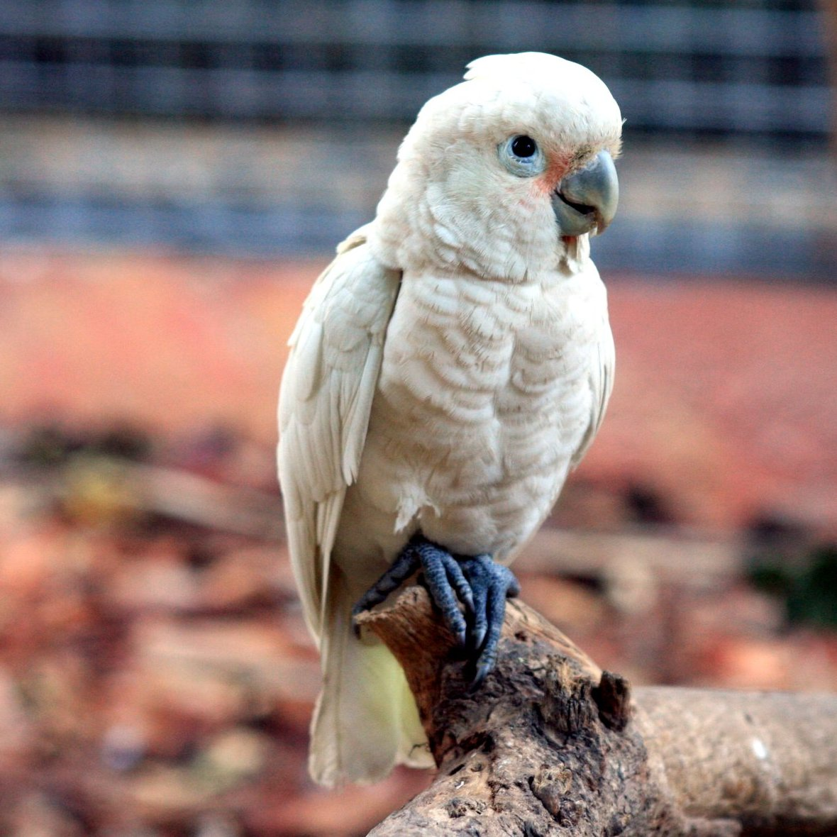 Mineola pet shop seeks return of stolen 'exotic' bird