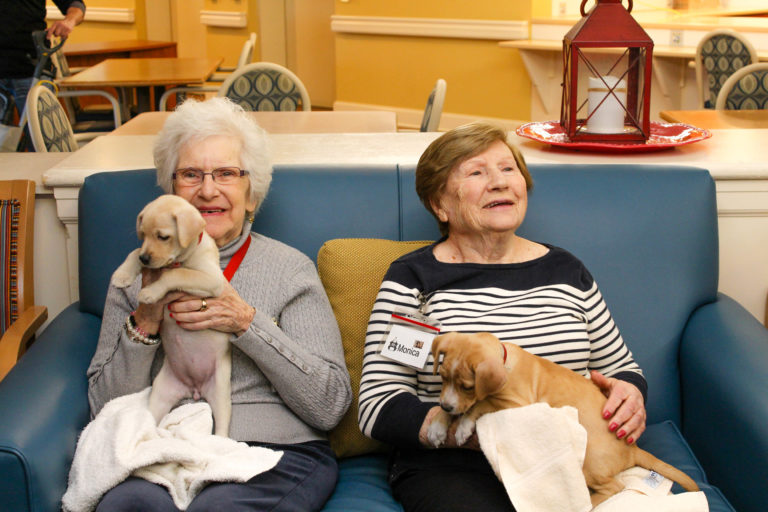 Therapy for seniors comes from puppies