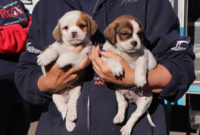 40 puppies arrive at North Shore Animal League America
