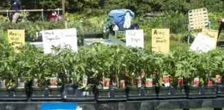 The plant sale at Clark Botanic Garden.