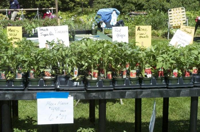 The plant sale at Clark Botanic Garden.