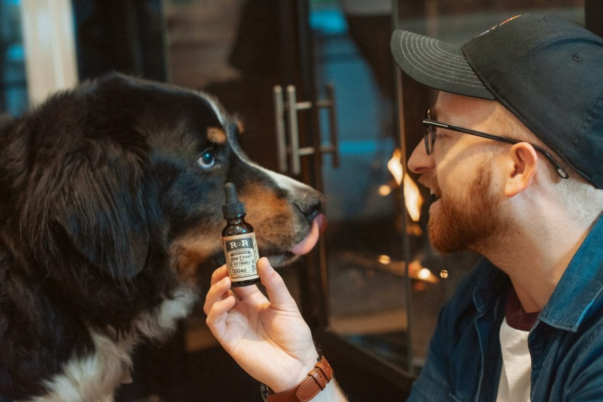Some Of 20+ Best Cbd Oil For Dogs Reviewed (Cbd Oil For Pets 2021)