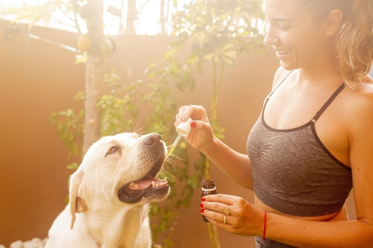 5 Best CBD Oil for Dogs with Anxiety [2021]