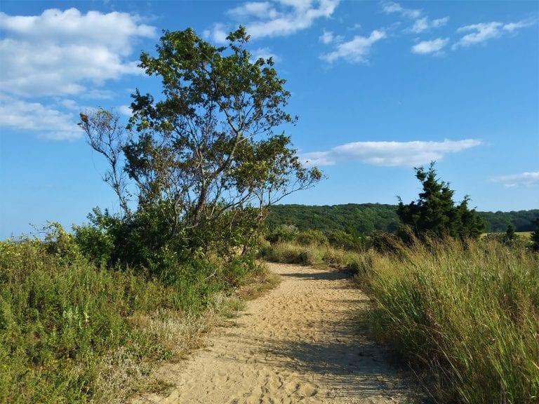Readers Write: Meditation on a Beach